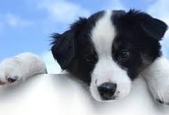 Happy Pets- Dog