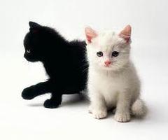 Happy Pets - Kitttens