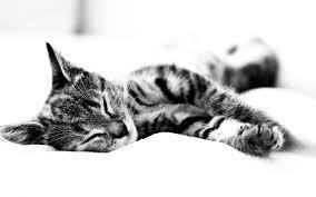 Happy Pets - Cat